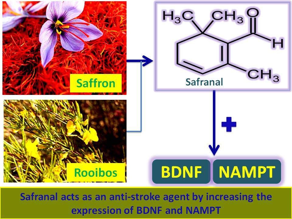 Natural product-derived therapy for Stroke: Safranal