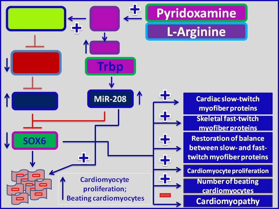 Molecular therapy for Cardiomyopathy: A pharmacological