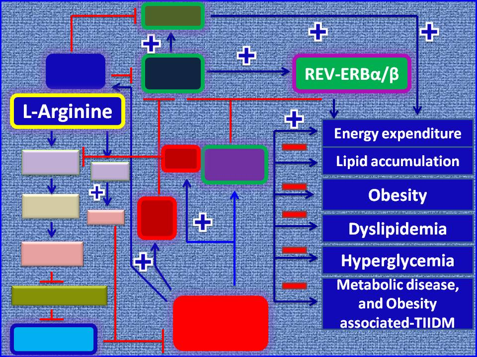Amino Acid Based Therapy For Body Weight Control Energy Homeostasis