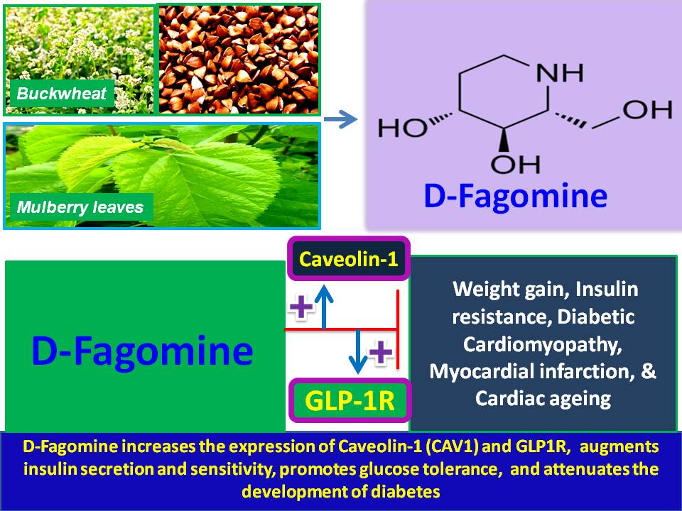 Sugar-based therapy for diabetes (TIIDM): D-Fagomine, an ...