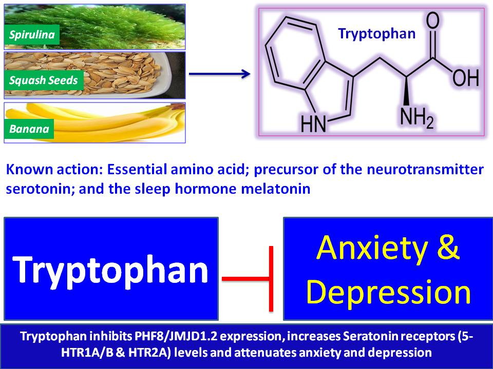 Amino acid-based therapy for anxiety and depression ...