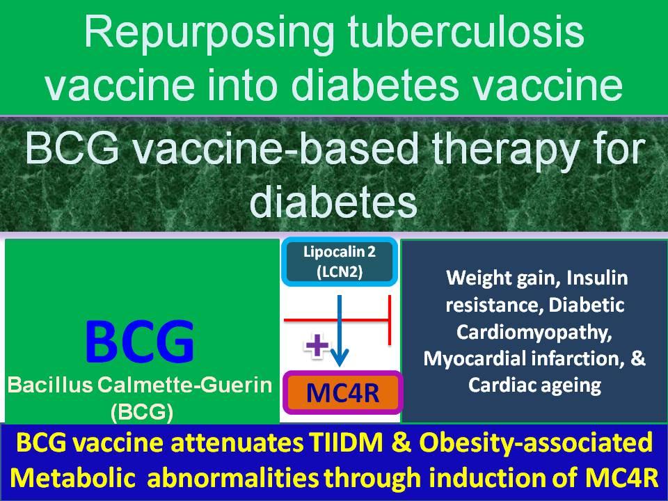 lcn2 diabetes cure