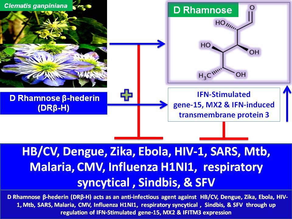 Deoxy sugar-based anti-infective Therapy: D Rhamnose β