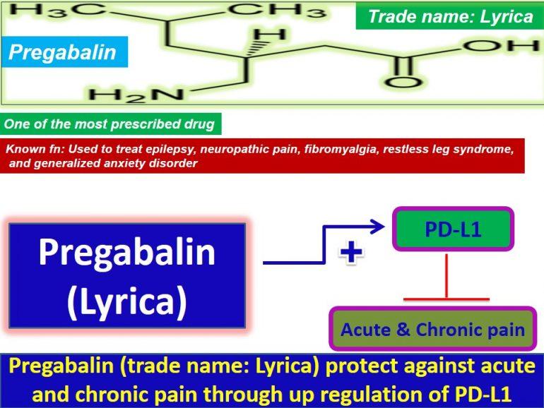 Mechanistic insights into how Pregabalin attenuates