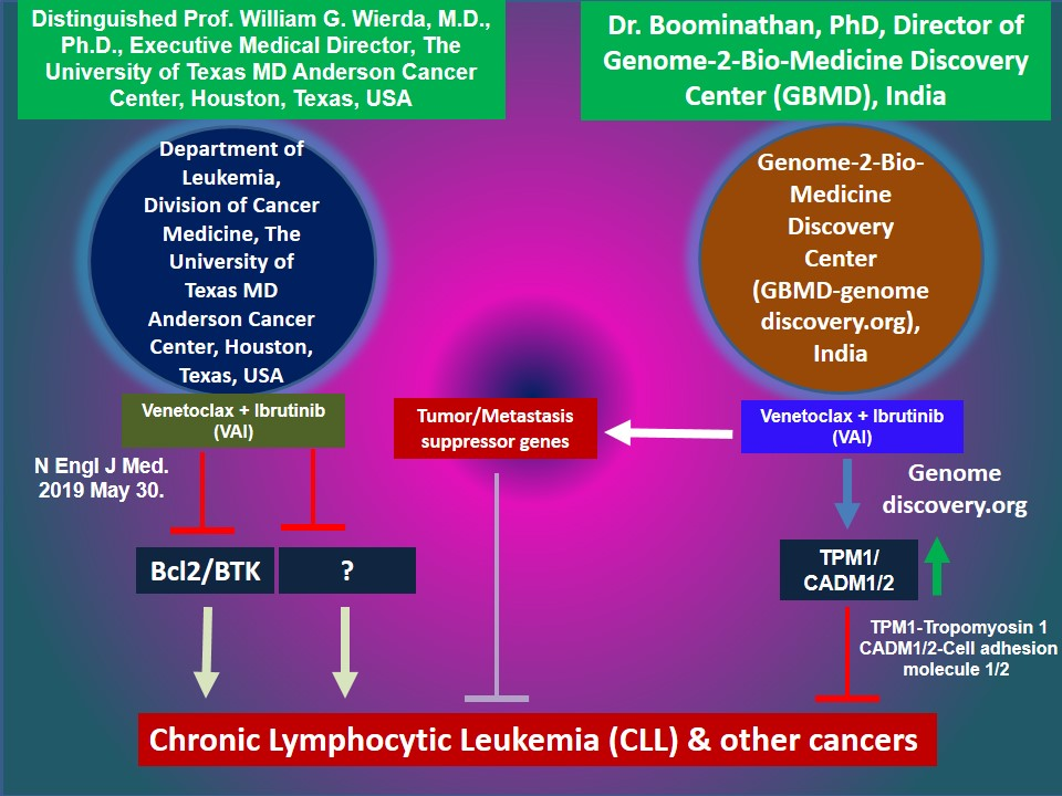 Probiotic-based chemotherapy targeting cancer stem cells and immune