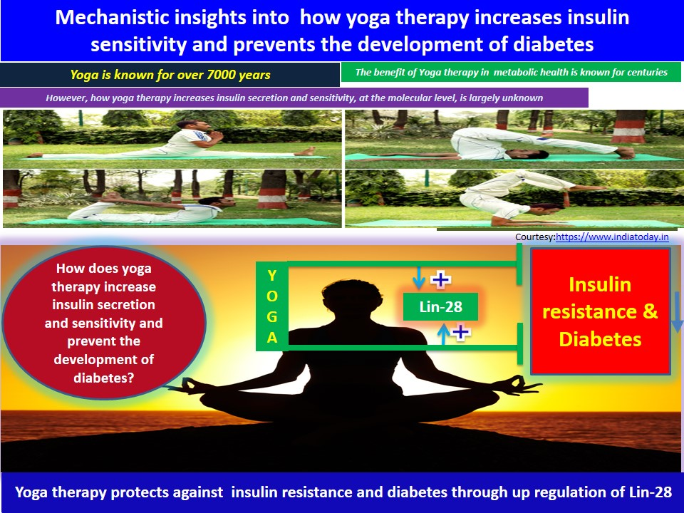 Yoga therapy for diabetes