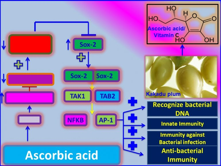 This image has an empty alt attribute; its file name is Ascorbic-acid-promotes-innate-immunity-against-bacterial-infection-through-induction-of-reprogamming-protein-Sox2.jpg1_-770x578.jpg
