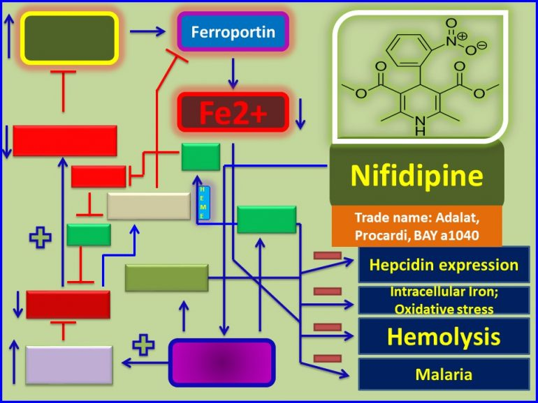 This image has an empty alt attribute; its file name is Nifidipine-protects-against-malarial-infection-through-up-regulation-of-ferroportin1-1-770x578.jpg