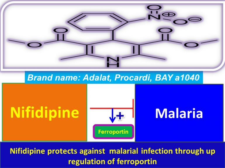 This image has an empty alt attribute; its file name is Nifidipine-protects-against-malarial-infection-through-up-regulation-of-ferroportin2-770x578.jpg
