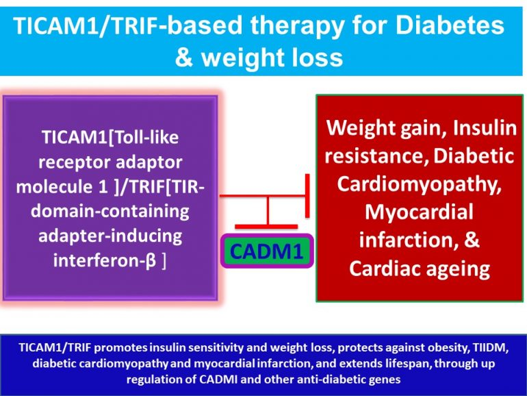 This image has an empty alt attribute; its file name is TICAM1.TRIF-promotes-insulin-sensitivity-and-weight-loss-protects-against-obesity-TIIDM.jpg2_-770x578.jpg