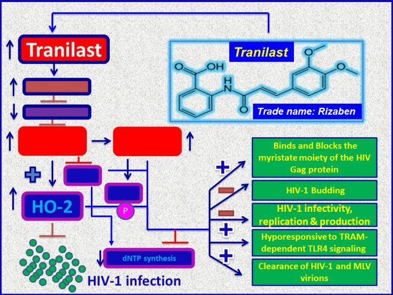 This image has an empty alt attribute; its file name is Tranilast-acts-as-an-antiviral-agent-against-HIV1-virus-through-induction-of-HO2-and-others-770x578.jpg