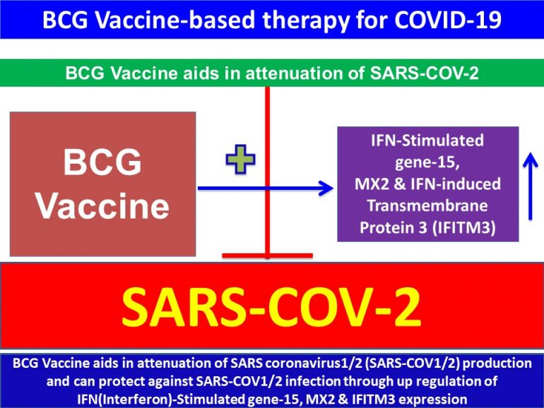 This image has an empty alt attribute; its file name is BCG-Vaccine-aids-in-attenuation-of-SARS-coronavirus2-SARS-COV2-production-and-can-protect-against-SARS-COV2-infection.jpg4_-770x578.jpg