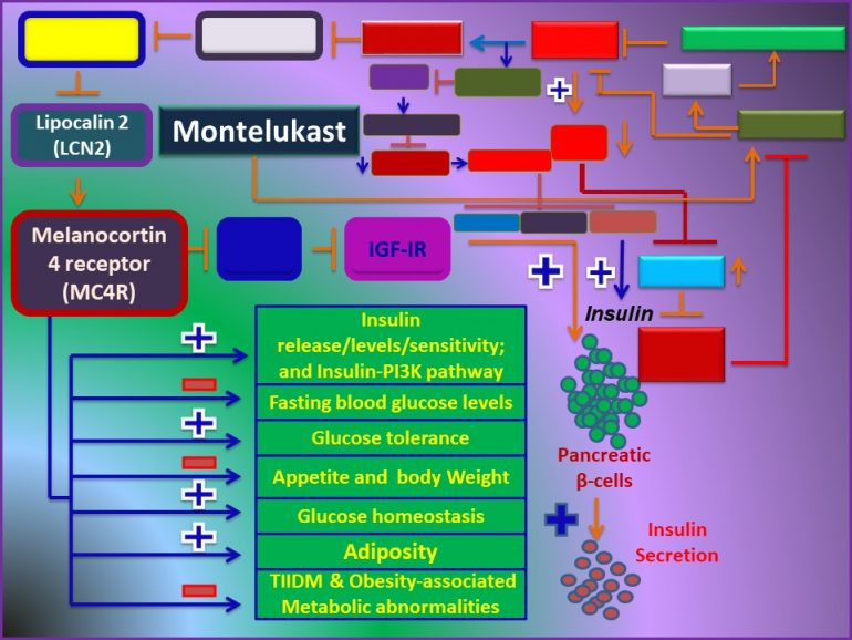 This image has an empty alt attribute; its file name is Montelukast-attenuates-the-development-of-TIIDM-Obesity-associated-Metabolic-abnormalities-through-induction-of-MC4R.jpg1_-770x578.jpg
