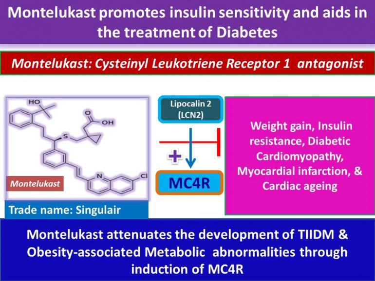 This image has an empty alt attribute; its file name is Montelukast-attenuates-the-development-of-TIIDM-Obesity-associated-Metabolic-abnormalities-through-induction-of-MC4R.jpg2_-770x578.jpg