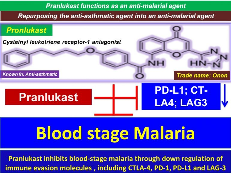 This image has an empty alt attribute; its file name is Pranlukast-inhibits-bloodstage-malaria-through-down-regulation-of-immune-evasion-molecules-including-CTLA4-PD-1-PD-L1-and-LAG3.jpg2_-770x578.jpg
