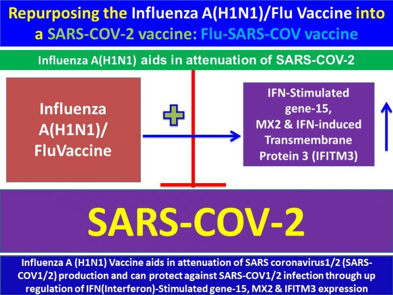 This image has an empty alt attribute; its file name is Influenza-A-H1N1-Vaccine-aids-in-attenuation-of-SARS-coronavirus1-and-2-production1-.jpg4_-770x578.jpg