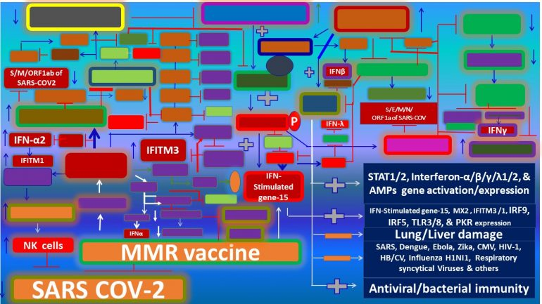 This image has an empty alt attribute; its file name is MMR-vaccine-aids-in-attenuation-of-a-number-of-infectious-diseases-including-COVID-19.jpg5_-770x433.jpg