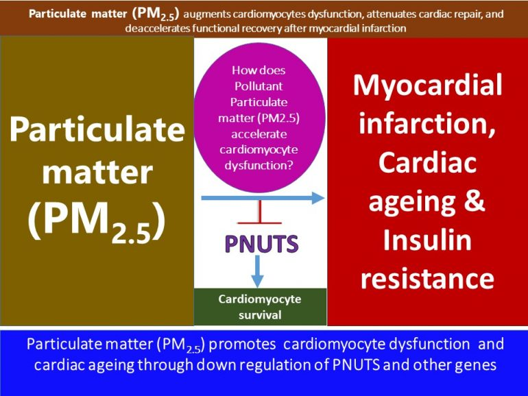 This image has an empty alt attribute; its file name is Particular-matter-PM2.5-prevents-functional-recovery-after-Myocardial-infarction-and-accelerates-cardiac-dysfunction13.1-770x578.jpg